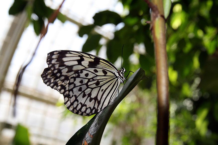 Dom motýľov vo Viedni